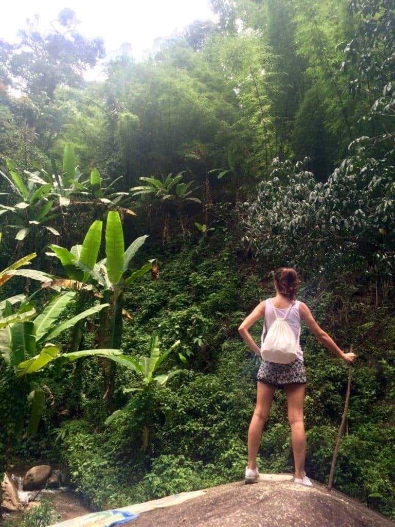 Chiang Mai Jungle Thailand