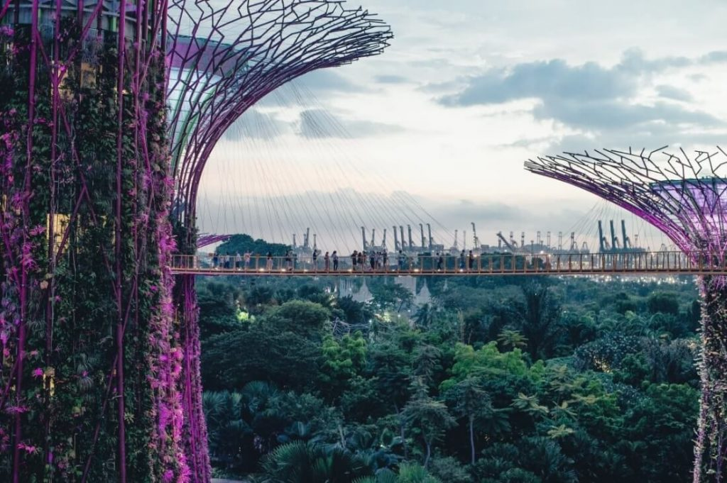 Singapore Supertree Groves