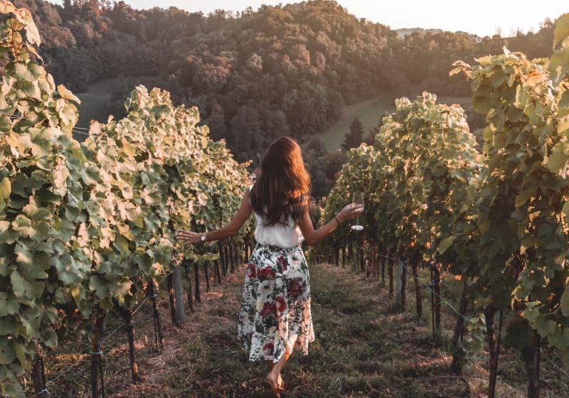 Vineyard at Vuglec Breg, Zagorje Croatia