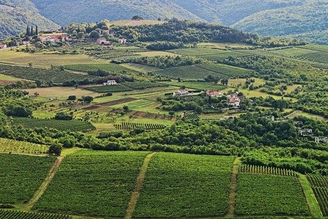Rolling green hills and vineyards in Istria Croatia
