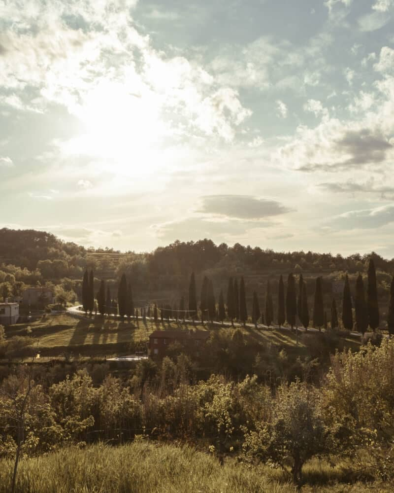 A beautiful sunset view of the rolling green hills and cypress trees in Oprtalj, Croatia.